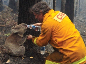 Image credit: Mark Pardew / Reuters A firefighter givrs water to a koala during the devastating Black Saturday brush fires that burned across Victoria, Australia, in 2009.